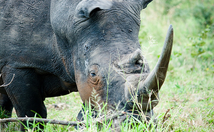 Rhino Accidently Killed In Demo Aimed To Stop Poachers