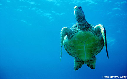 Ocean Life in the Balance: Will Science Overcome Politics at Rio+20 Conference?