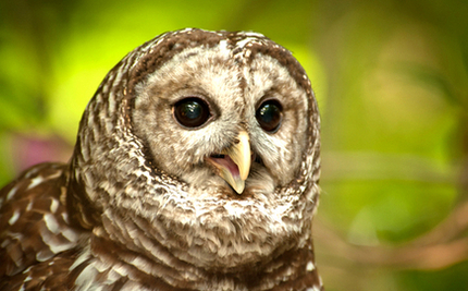 Owl Rescue on Peace River: Video