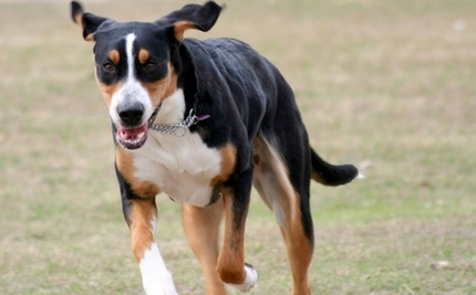 Doggie Doppelganger's Warm-Hearted Rescue Caper