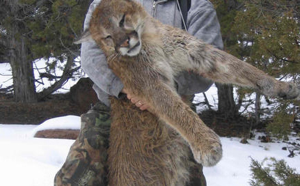 "CA Fish & Game Official Shoots Mountain Lion, Is ""Glad It's Legal In Idaho"""