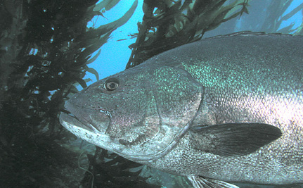 1 in 10 Marine Species Could Go Extinct in Tropical Eastern Pacific