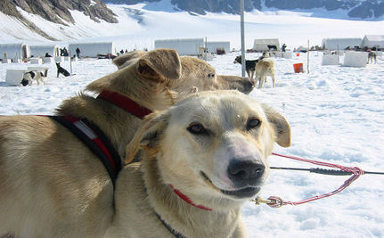 New Code For Sled Dogs Includes How To Shoot Them