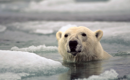 Giving Polar Bears a Chance to Survive