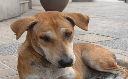 Gemma Ashford: Singlehandedly Saving Thailand's Street Dogs (Video)
