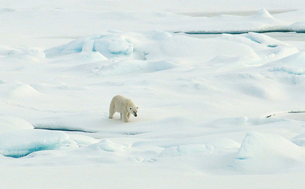 Chill Out…It's International Polar Bear Day!