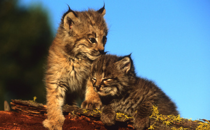 Support a Trapping Ban in Minnesota