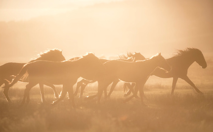 Join the National Wild Horse and Burro Protest Day