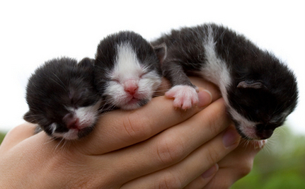 Kittens on Hillside Beckon Rescuers