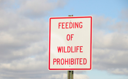 Minnesota Legislator Discusses Food Stamps: Please Don't Feed The Animals