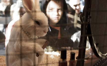 "Was Your ""Cruelty Free"" Makeup Tested on Animals?"