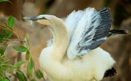 Hero Hatches Rescue of Baby Bird Hanging by the Beak