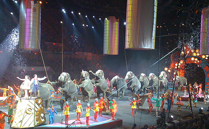 Arkansas National Guard Cancels Circus Accused Of 33 Animal Violations