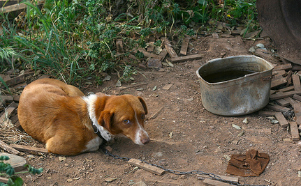 Support a Bill to Help Chained Dogs in Massachusetts