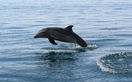 New Finding Offers Hope for Critically Endangered Dolphin
