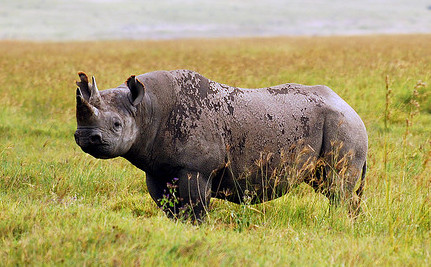 Rhino Ranches Take New Approach to Prevent Poaching