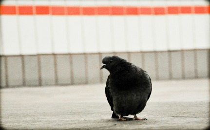 New York City Subway Uses Bird Sounds to Ward Off Pigeons