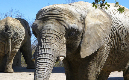 Bob Barker Pays $880,000 To Fly Elephants To Sanctuary