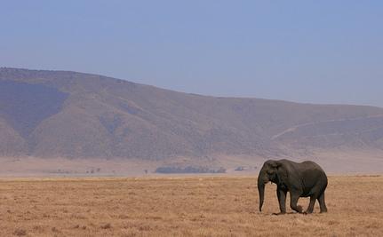 Elephants Being Massacred in Cameroon