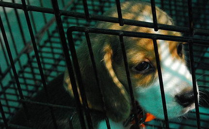 Facebook Bans Puppy Mill Ads