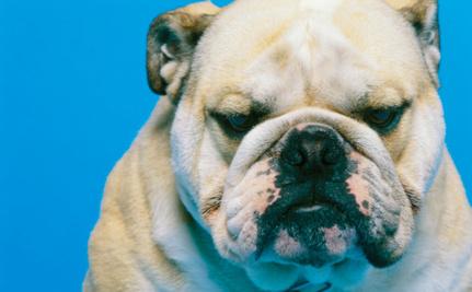 """GOP Rep Compares Sandra Fluke To a """"Studding Bulldog"""""""