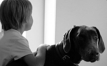 6 Ways Pet Therapy Helps Animals