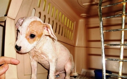 Dog Left in Wall for Two Weeks Leads to World's Biggest Baby Shower for Animals
