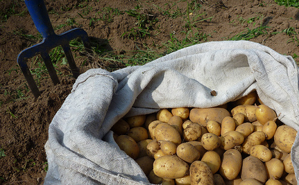 The Potato Movement: Greeks Helping Each Other in Hard Times (Vid