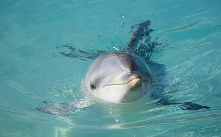 Victory! Captive Dolphins Banned in Switzerland