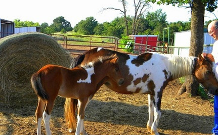 Crippled Horse and Her Baby Saved from Auction Barn
