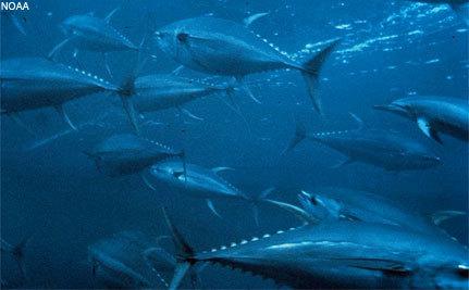 The Bottom Line: Fishing for Giants