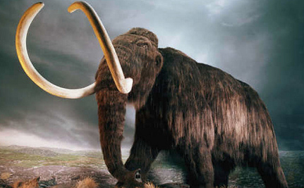Rebirth of the Woolly Mammoth