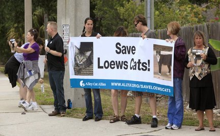 Protest To Stop Trapping Cats At Loews Orlando