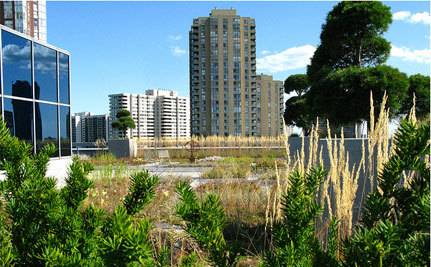Toronto First North American City to Require Green Roofs