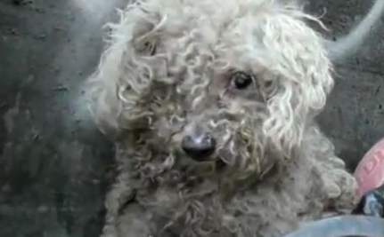 Amazing Rescue Of Blind Dog Living In L.A. Trash Dump (Video)
