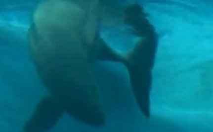 What's Killing China's Rare River Porpoises? (Video)