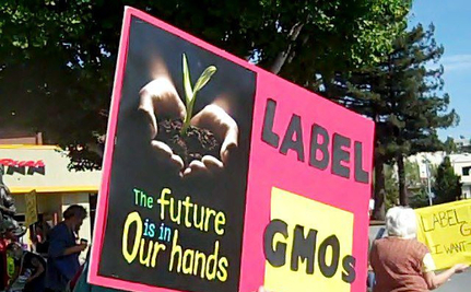 Should We Care About GMOs?