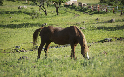 Madeleine Pickens' Wild Horse Sanctuary Moves Forward