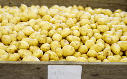 Florida Potato Grower Accused of Labor Trafficking
