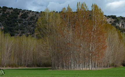 Happy National Arbor Day! Enjoy Our Slideshow Of Amazing Trees