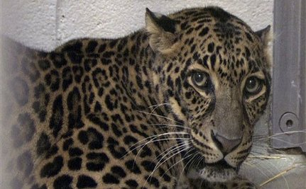 Ohio Officials to Return Exotic Animals to Zanesville Widow