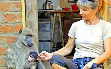 Wildlife Guardian Accepted by Baboons: Tender Video Footage