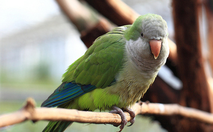 Lost Parakeet Tells Police Its Address