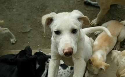 Strangling Puppies and Guillotining Sheep: Not Art