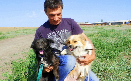New Russian Shelter Shines Love on Homeless Animals