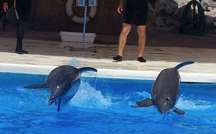 Connyland Partygoers Drugged Two Dolphins, Led to Their Deaths