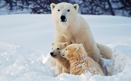 Meet the Cutest Animal Moms and Their Babies (Slideshow)