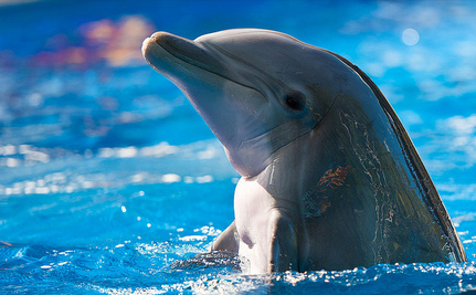 South Korean Captive Dolphins Have a Shot at Freedom