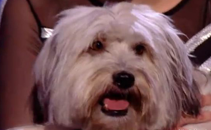 Pudsey The Dog Wins Britain's Got Talent (Video)