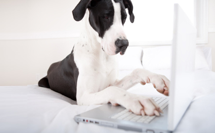 Support Proposed Regulations for Online Pet Sales